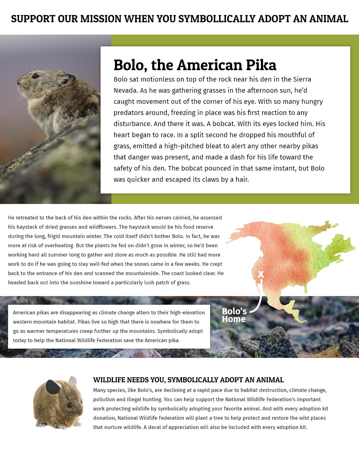 Adopt an American Pika header image