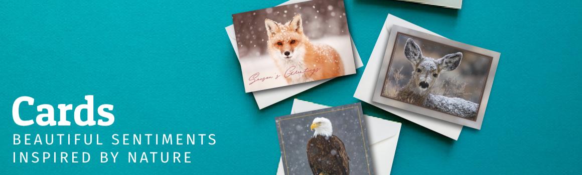 Cards header image