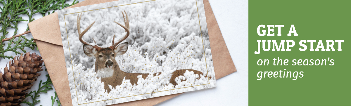 View All Holiday Cards header image