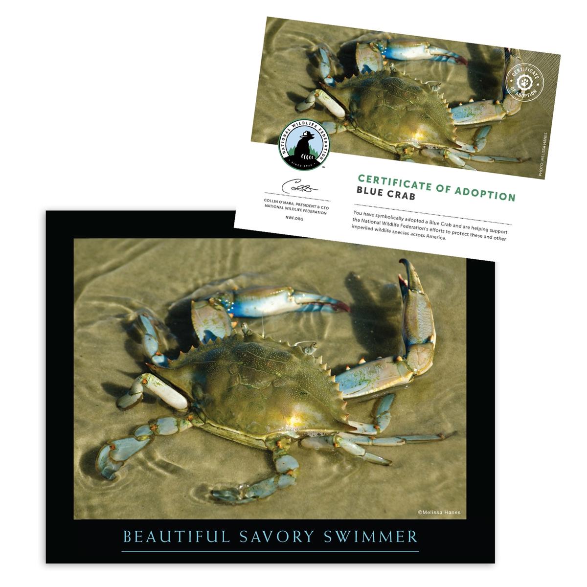 Adopt a Blue Crab