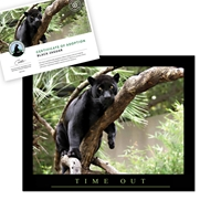 Adopt a Black Jaguar