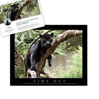 Adopt a Black Jaguar