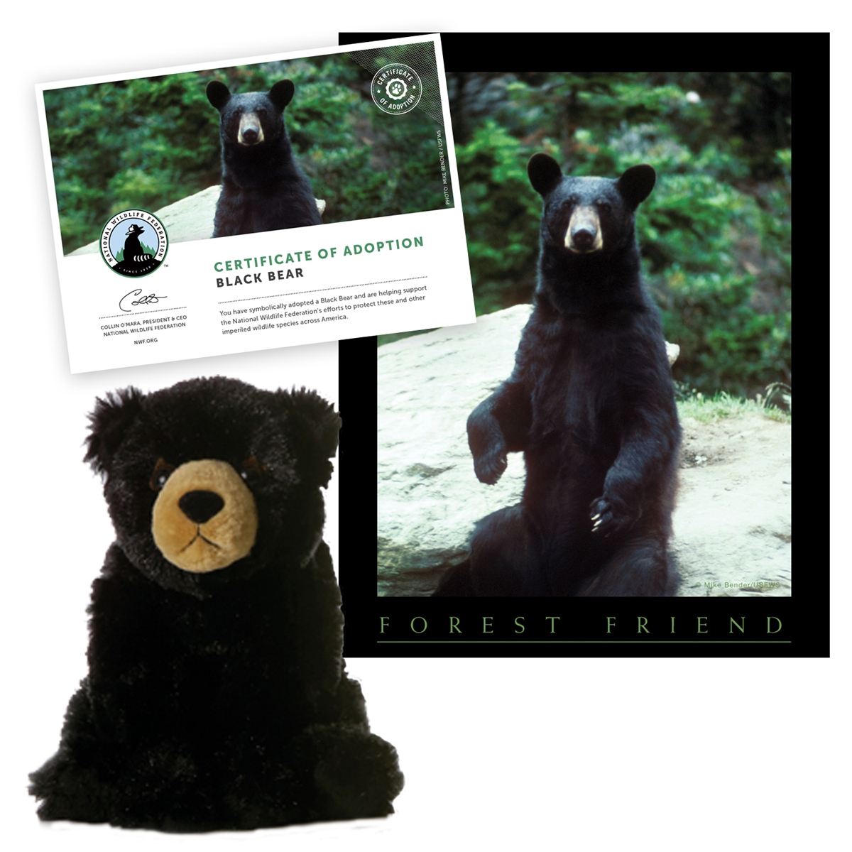 Adopt a Black Bear