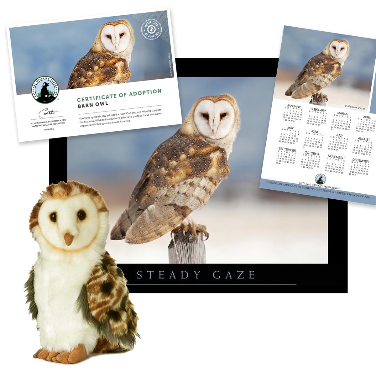 Adopt a Barn Owl