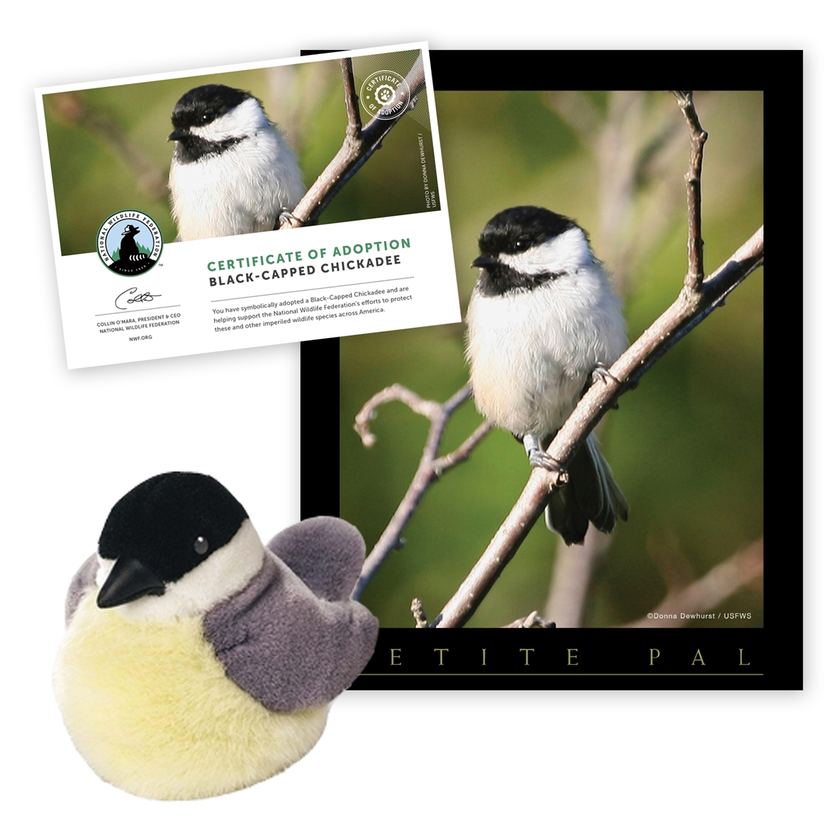 Adopt a Black-Capped Chickadee