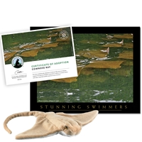 Adopt a Cownose Ray