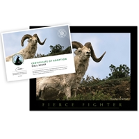 Adopt a Dall Sheep