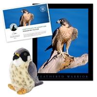 Adopt a Peregrine Falcon