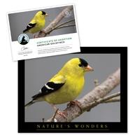 Adopt an American Goldfinch