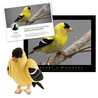 Adopt an American Goldfinch