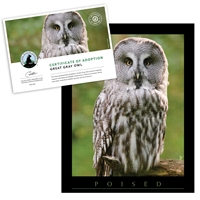 Adopt a Great Gray Owl