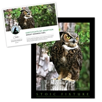 Adopt a Great Horned Owl