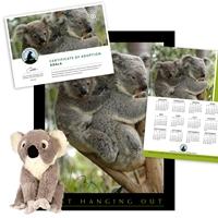 Adopt a Koala