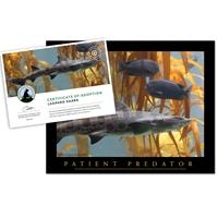 Adopt a Leopard Shark