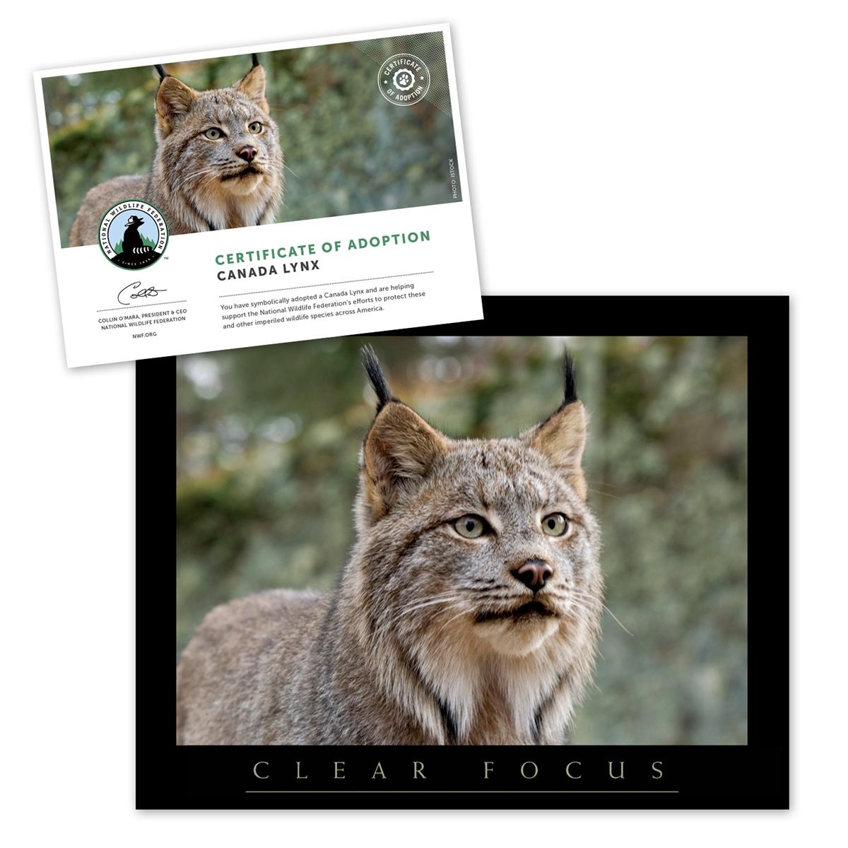 Adopt a Canada Lynx