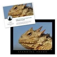 Adopt a Horned Lizard