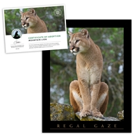 Adopt a Mountain Lion