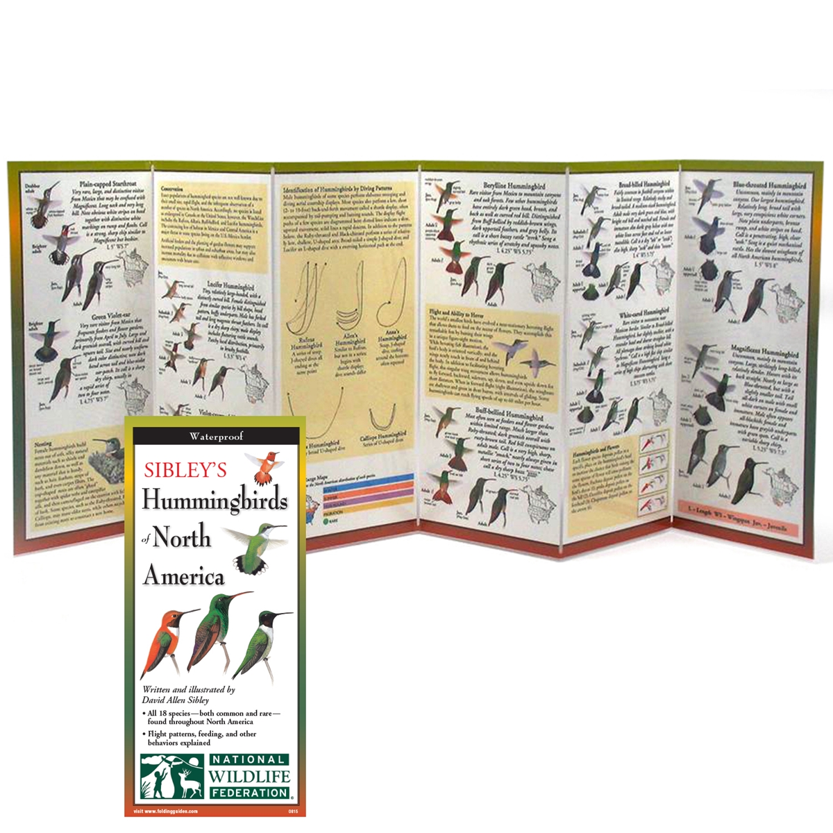 Hummingbird Guide