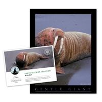 Adopt a Walrus