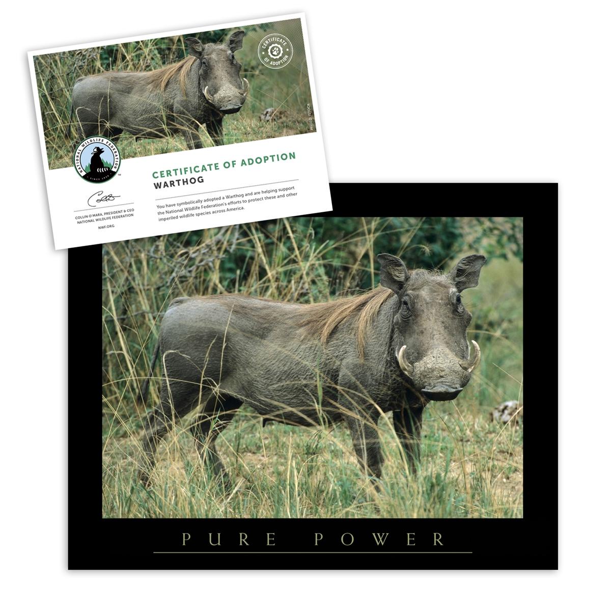 Adopt a Warthog