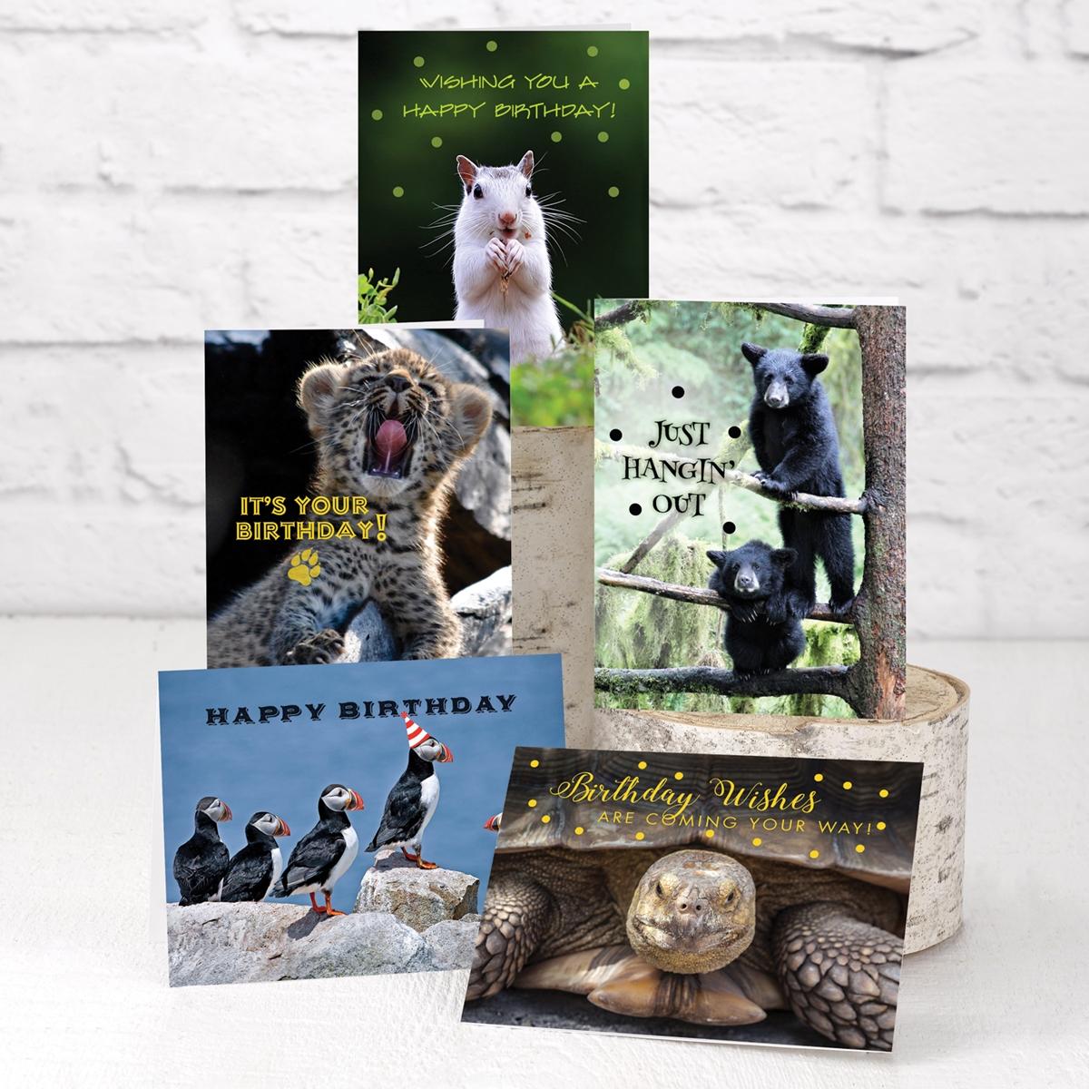 Wild Wishes Birthday Assortment