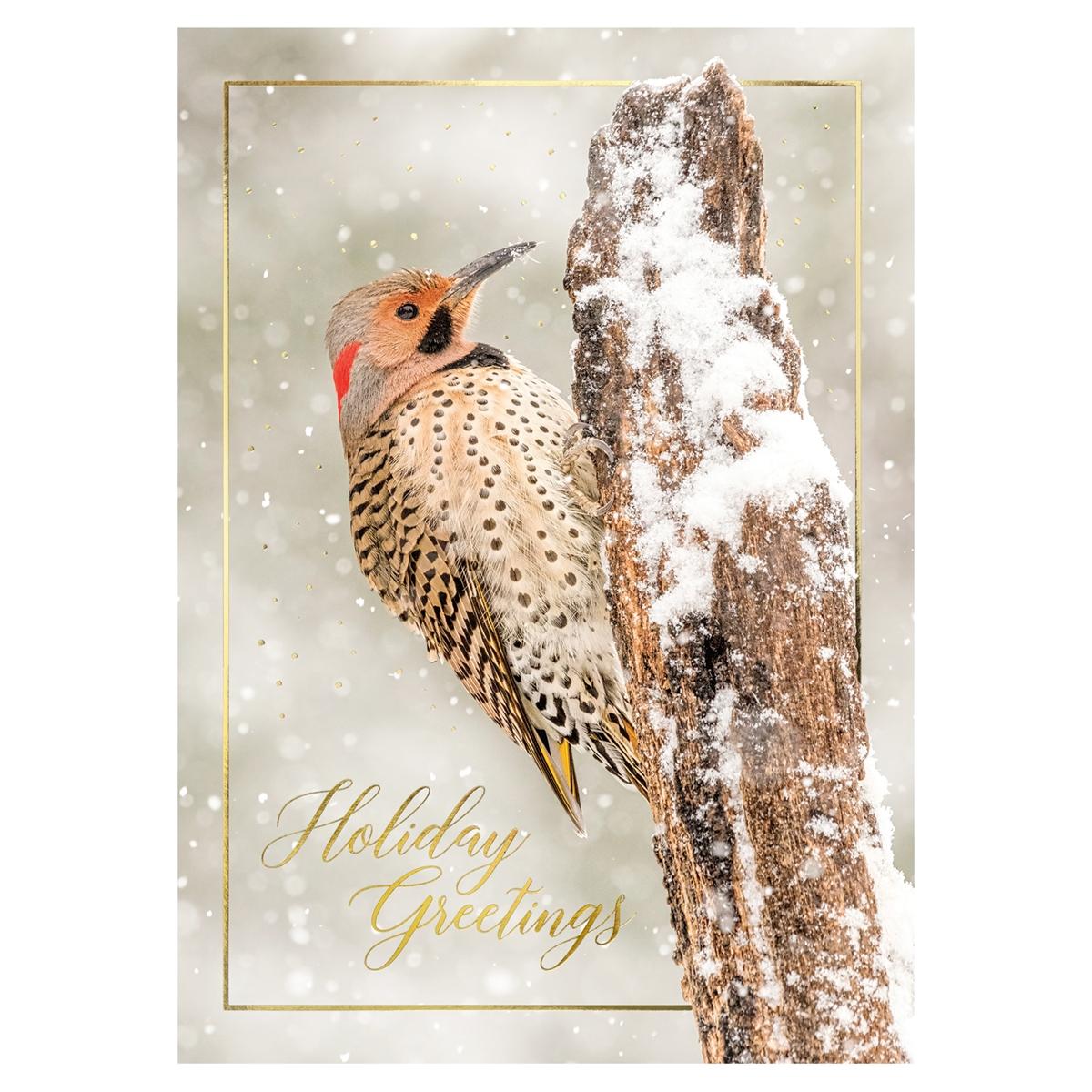 Northern Flicker Card