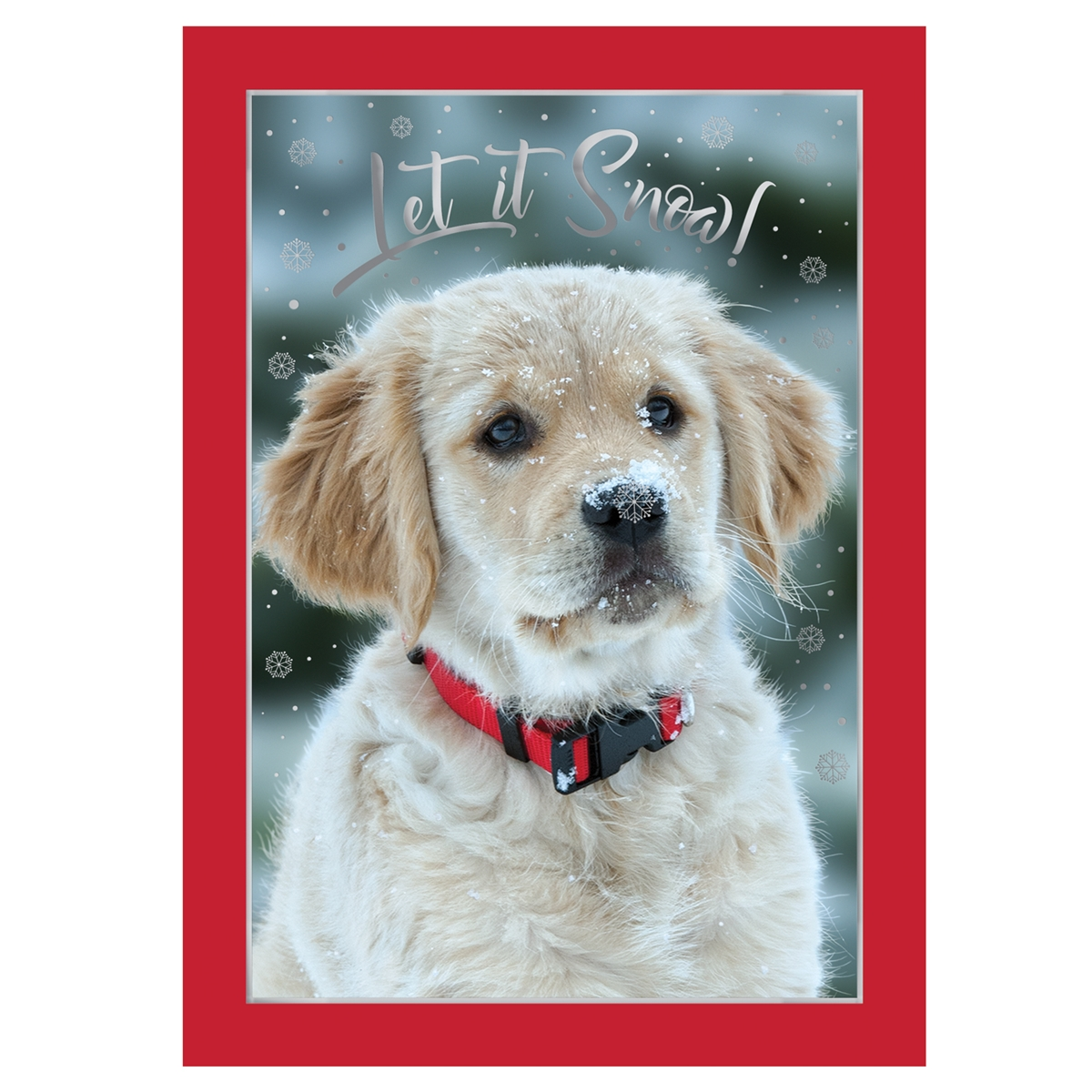 Golden Retriever Puppy in Snow Card