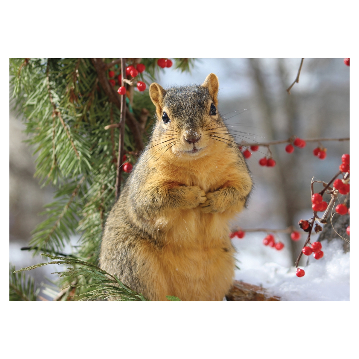 Squirrel with Berries Card