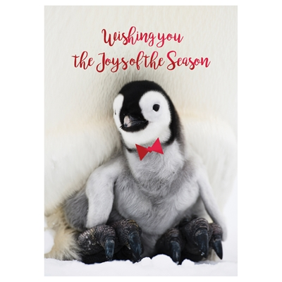 Penguin Greetings Holiday Cards