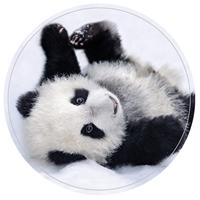 Posing Panda Envelope Seal