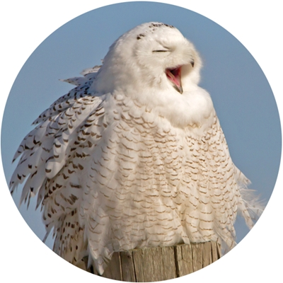 Snowy Owl Wonderland Envelope Seal