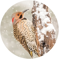 Northern Flicker Envelope Seal