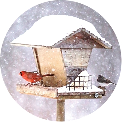 Cardinals on Birdfeeder in Snow Envelope Seal