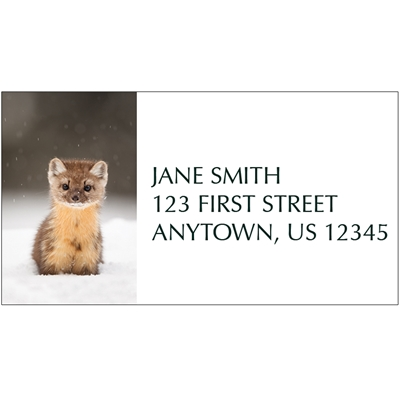 American Marten Address Label
