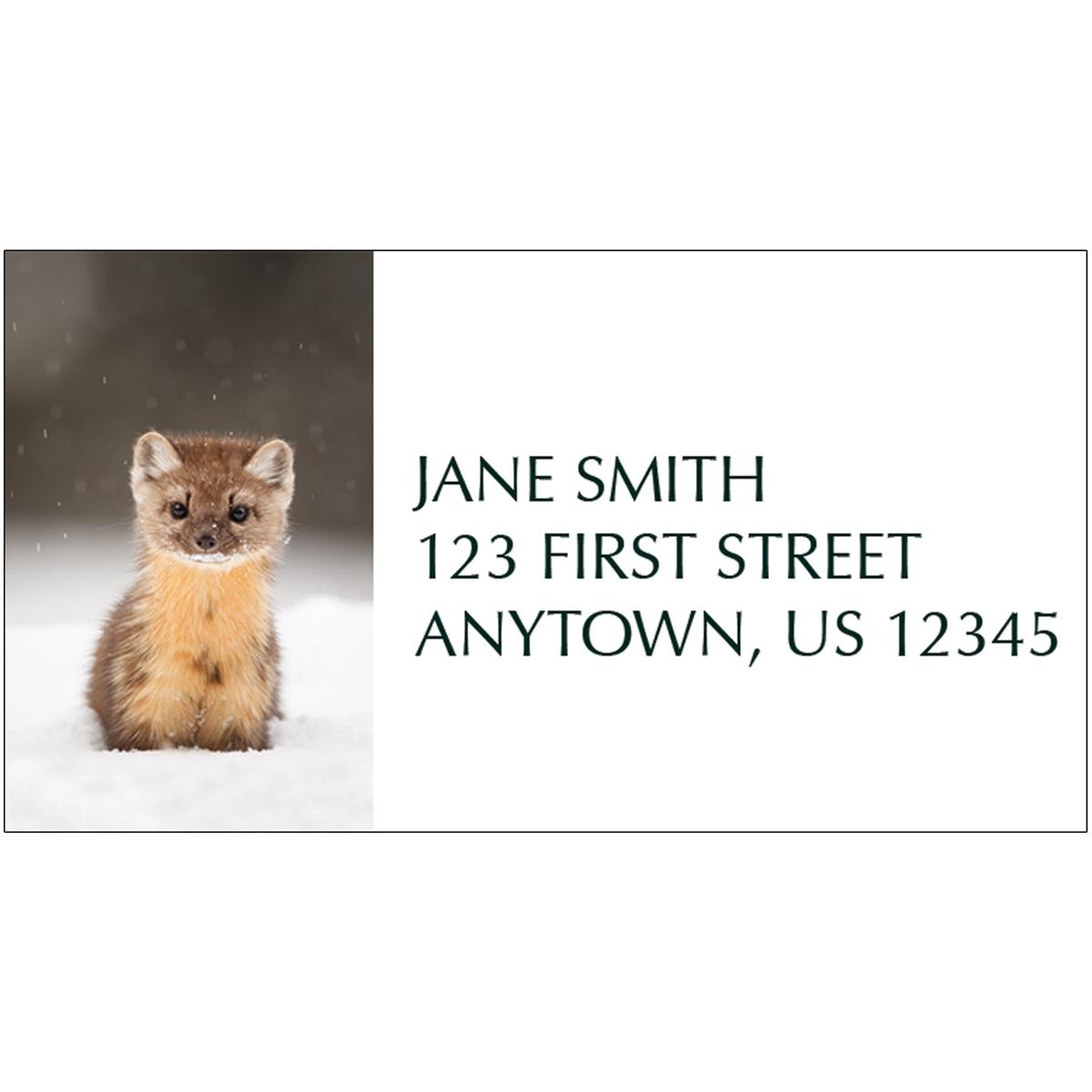 American Marten Address Label