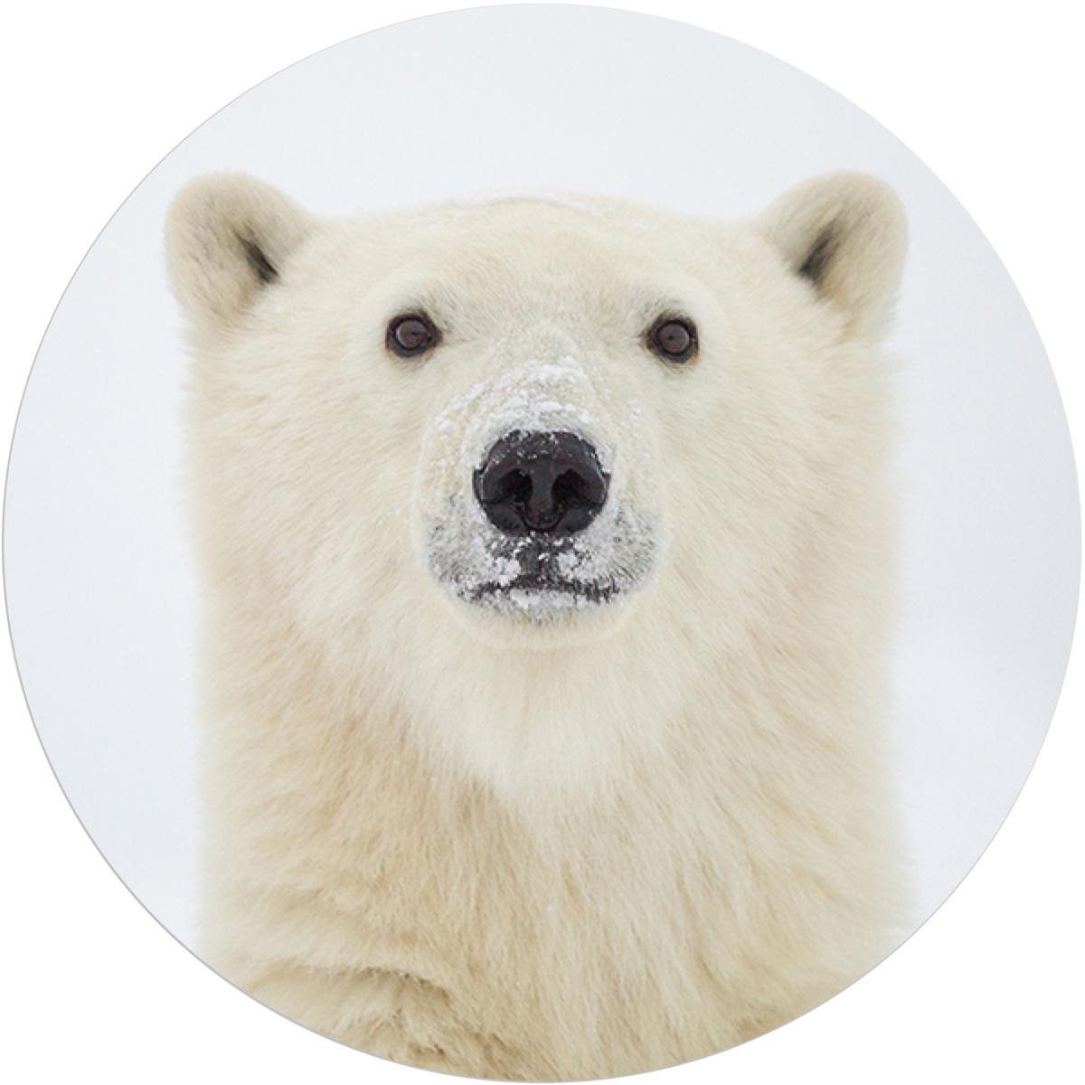 Yearling Polar Bear Envelope Seal