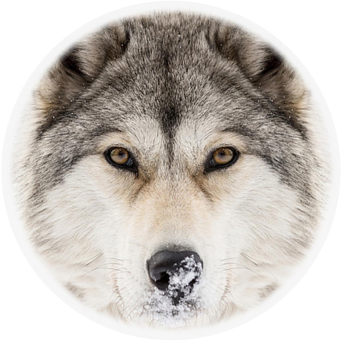 Timber Wolf Envelope Seal