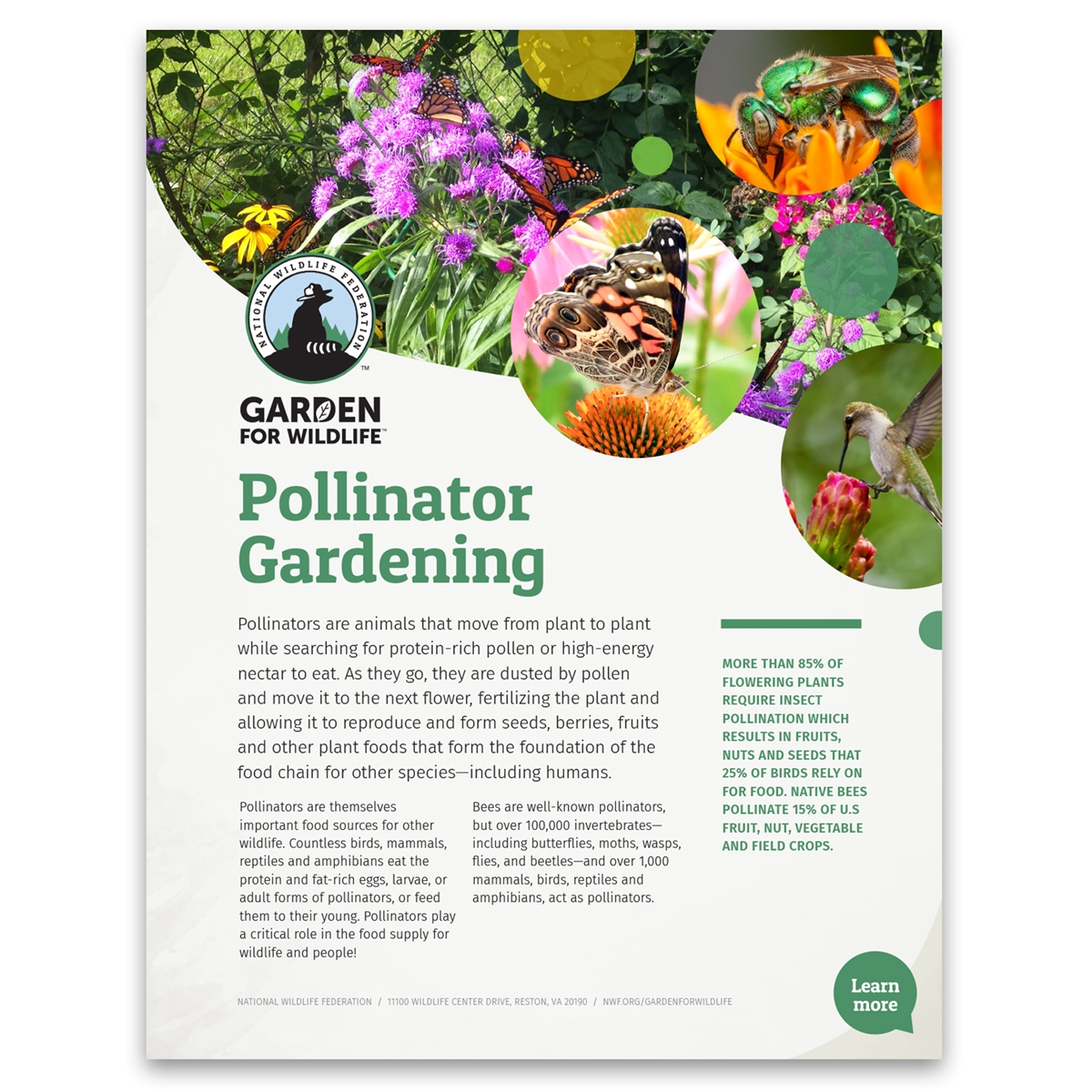 Pollinators Tip Sheet