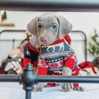 Moose Fair Isle Dog Coat