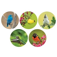 Brilliant Birds Envelope Seals