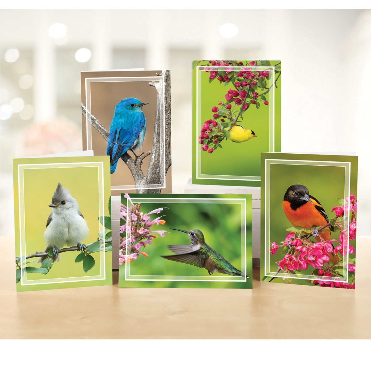Brilliant Birds Note Card Assortment