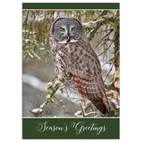 Great Grey Owl Card