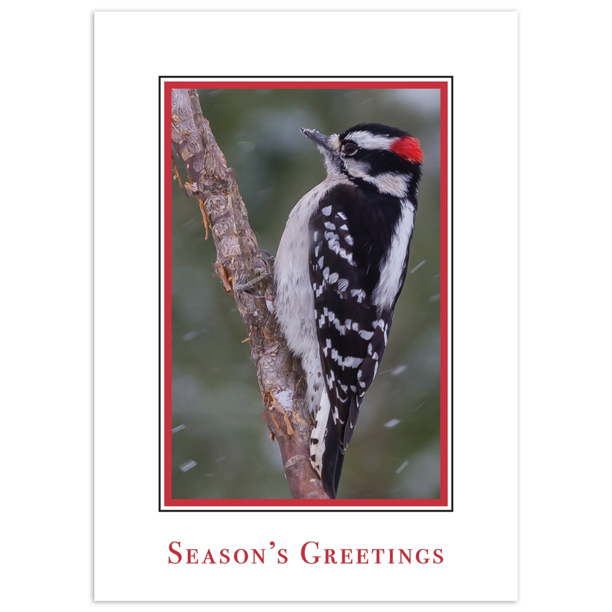 Downy Woodpecker in Snow Card