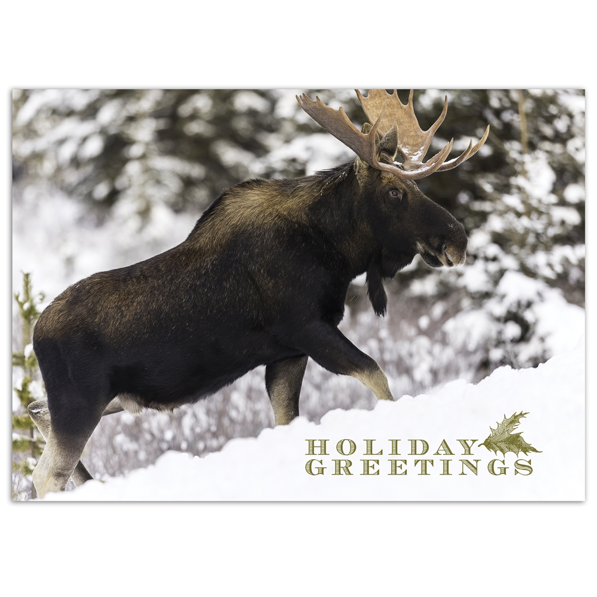 Majestic Moose Card
