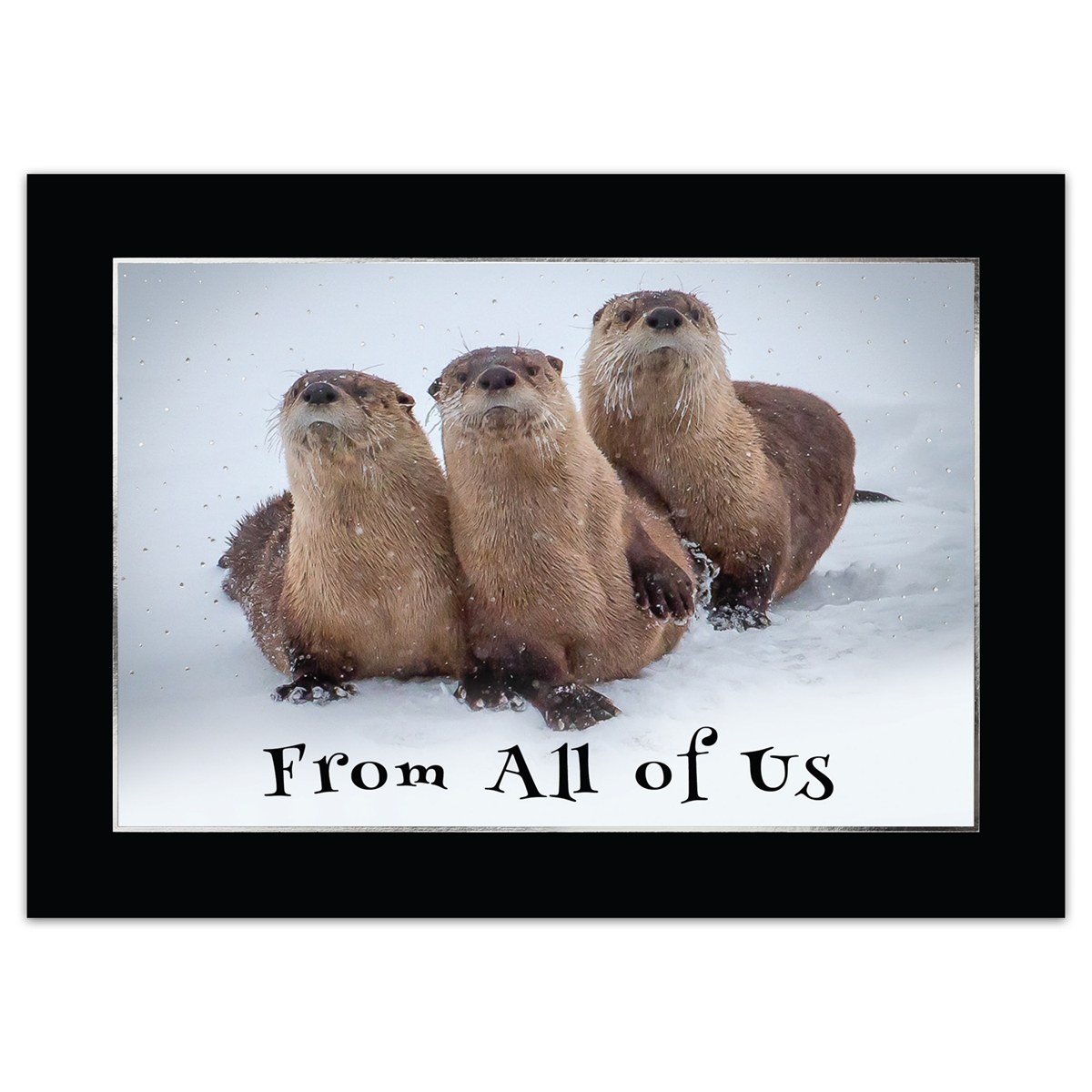 River Otters From All of Us Holiday Cards