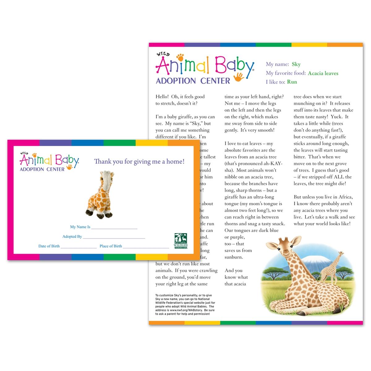 Adopt a Baby Giraffe
