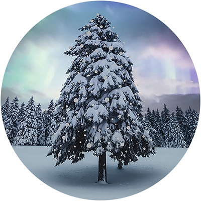 Northern Lights Tree Envelope Seal