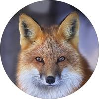 Red Fox Envelope Seal