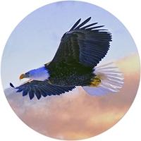 Soaring Eagle Envelope Seal