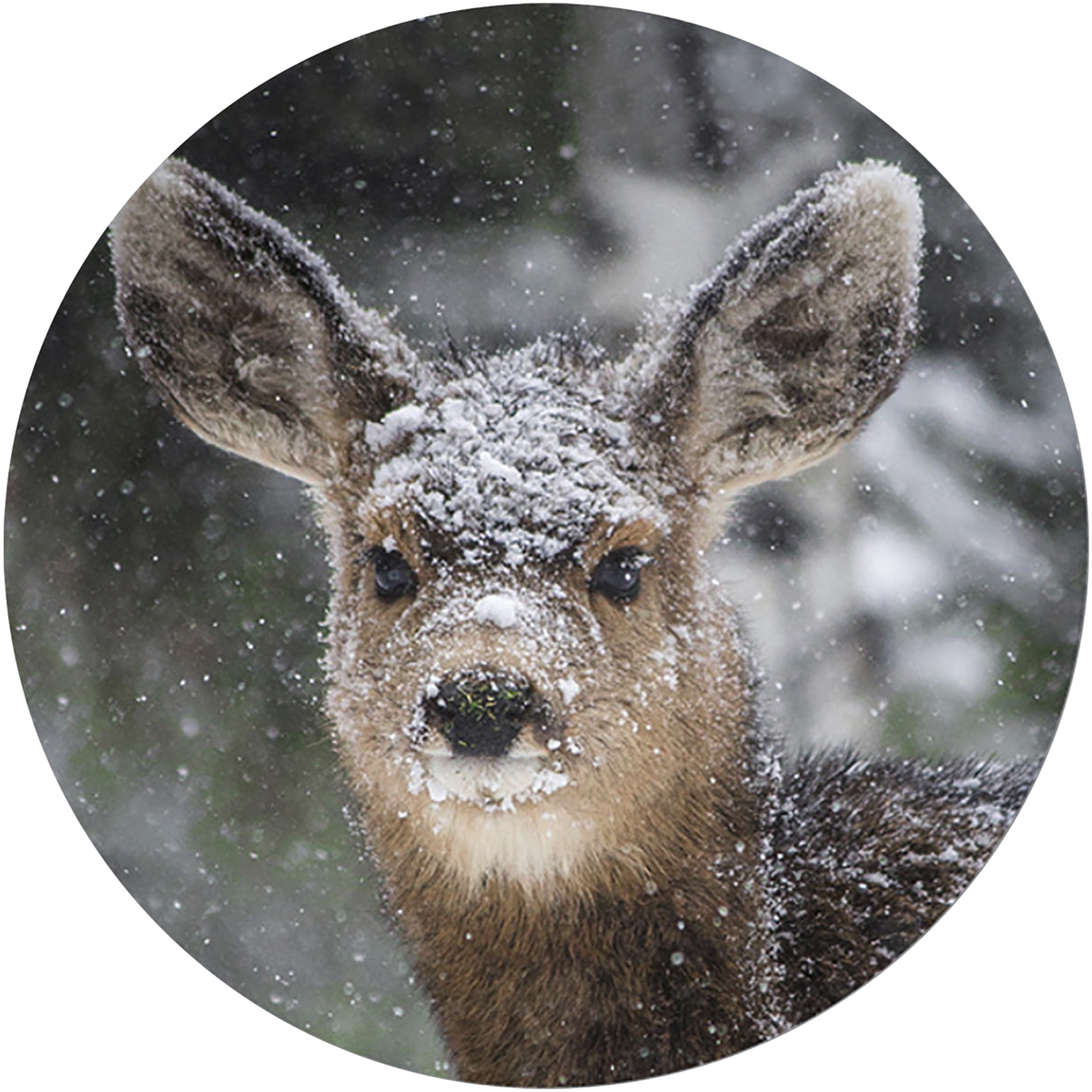 Fawn In Snow Envelope Seal